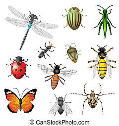 férgek, vagy, rovar