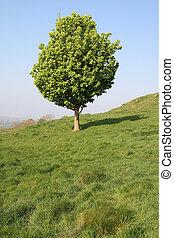 függőleges, fa, field., angol, kicsi, kilátás