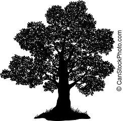 fű, árnykép, tölgyfa