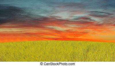 fű, ég, piros
