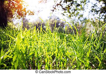 fű, ég