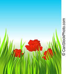 fű, piros, mákok