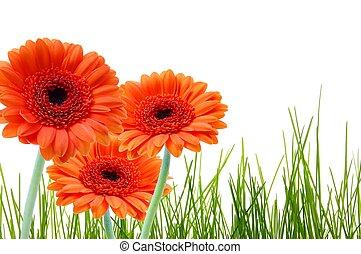 fű, virág, copyspace