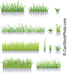 fű, zöld, állhatatos