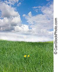 fű, zöld ég, gyermekláncfű