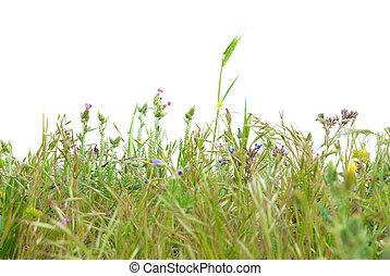 fű, zöld, elszigetelt