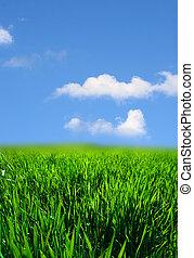fű, zöld parkosít