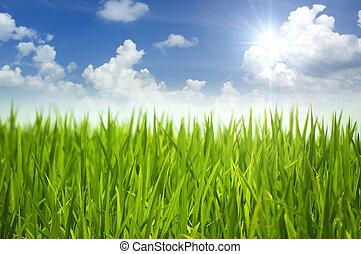 fű, zöld, sky.