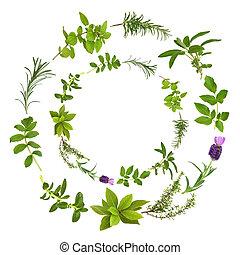 fűszernövény, elvont, levél növényen, tervezés