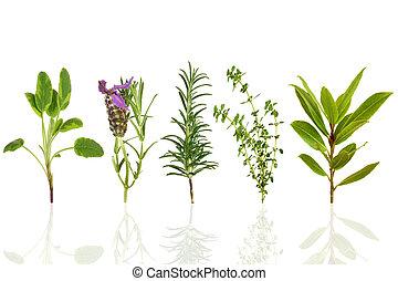 fűszernövény, levél növényen, kiválasztás