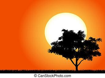fa, árnykép, napnyugta, afrika