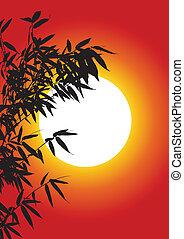 fa, bambusz, árnykép