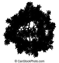 fa, egyszerű, -, fekete, árnykép, elszigetelt, vektor, részletes, tető