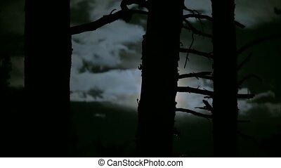fa erdő, kék, sötét, hold, farkas, veszély, misztikus, elágazik, éjszaka