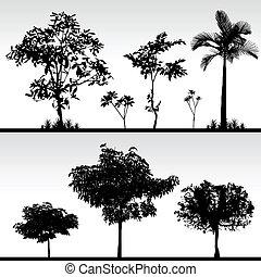 fa, fű, árnykép