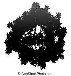 fa, -, fekete, árnykép, elszigetelt, gradiens, vektor, részletes, tető