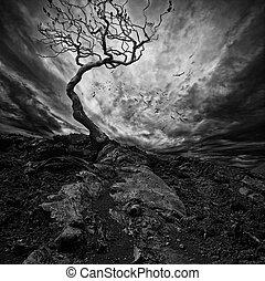 fa, felett, drámai, elhagyott, ég, öreg