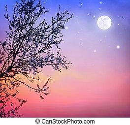 fa, felett, virágzó, ég, éjszaka