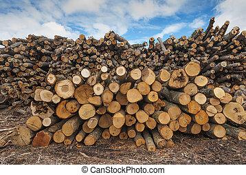 fa felhalmoz, állomást bemér