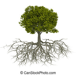 fa gyökér