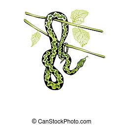 fa, kígyó