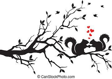 fa mókus