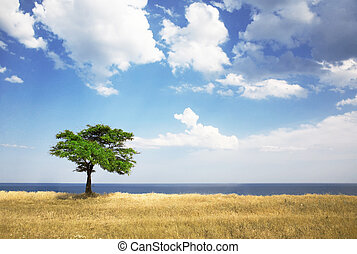 fa, mező, tenger