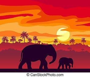 fa., napnyugta, sziget, pálma, tropikus, körvonal