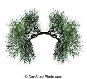 fa, tüdő