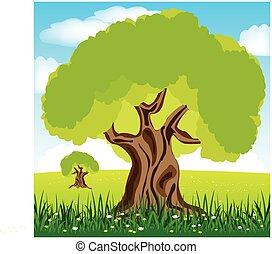 fa, tisztás