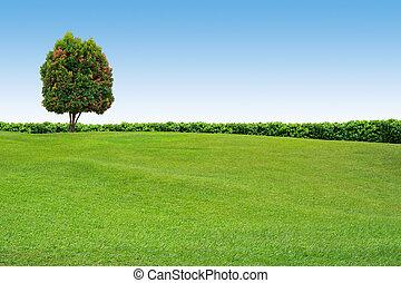 fa, világos, fű, ég