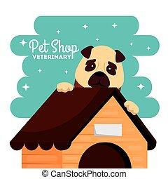 faház, bolt, kutya, állatorvos, kedvenc, csinos