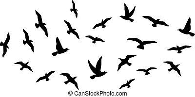 falka, repülés, madarak