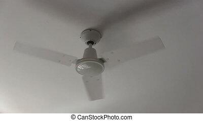 fan., plafon