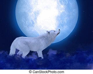 farkas, 3, moonlight., méltóságteljes, fehér, vakolás