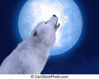 farkas, ordító, 3, moonlight., méltóságteljes, fehér, vakolás