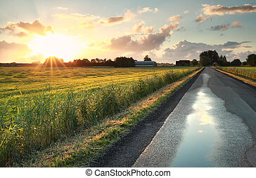 farmland, felett, napfény, reggel, holland, út