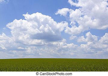 farmland, háttér