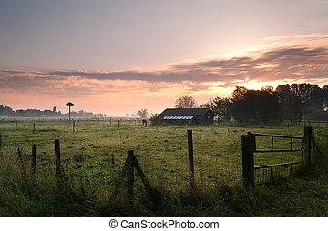 farn, holland, reggel