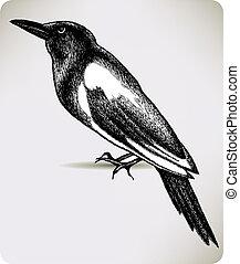 fecsegő, hand-drawing., vektor, madár, illustration.