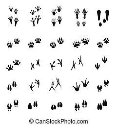 fehér, állat, emlős, körvonal, háttér, lábnyomok, madarak, elszigetelt, -, állhatatos
