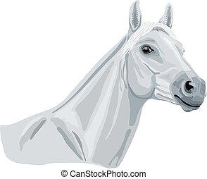 fehér, arabian ló
