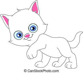 fehér, cica
