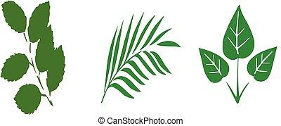 fehér, levél növényen, háttér, ikon