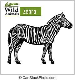 fehér, monochrom, mód, zebra, elszigetelt