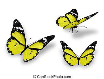 fehér, pillangók, három, sárga, elszigetelt