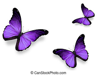 fehér, pillangók, ibolya, elszigetelt, három