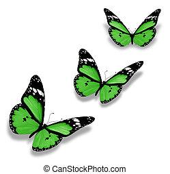 fehér, pillangók, zöld, három, elszigetelt
