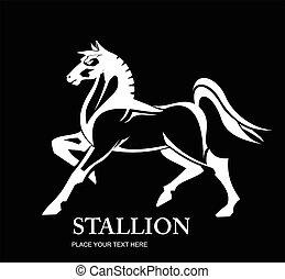fehér, stallion., horse.