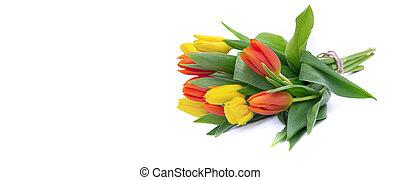 fehér, yelow, narancs, csokor, körképszerű, tulipánok, kilátás, elszigetelt, becsuk